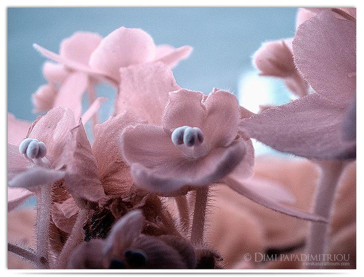 Tiny Pink by LightSculpting.deviantart.com on @DeviantArt