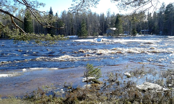 Kiiminkijoki tulvii