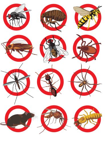 We provide pest control for vermin and pests in and around your home