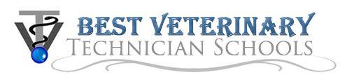 Top Veterinary Technician Schools in Connecticut   CT Vet Tech Programs