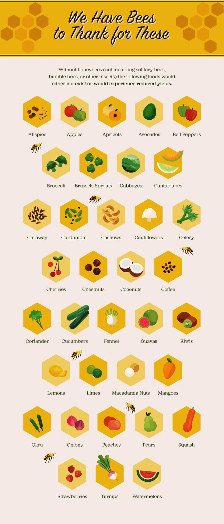 The Importance of Bees: Foods That Bees Make