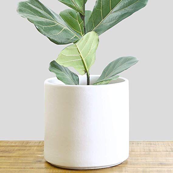 Amazon Com Indoor Flower Pot Large Modern Planter Terracotta Ceramic Plant Pot Plant Container Great Fo Indoor Plant Pots Indoor Flower Pots Flower Pots