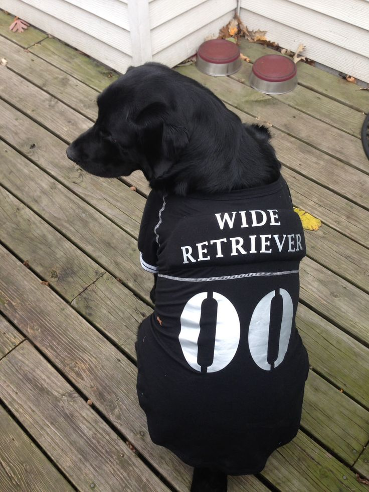 ozzie looking for the trick or treaters - Halloween Costumes For Labradors