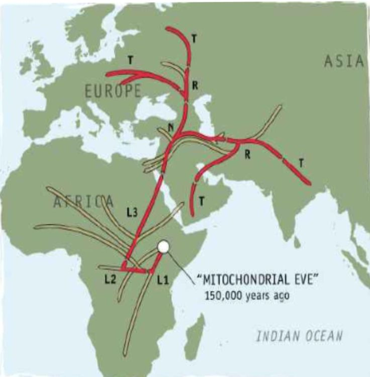Hi, someone know which evidence can I use to write an essay about the multiregional evolution?