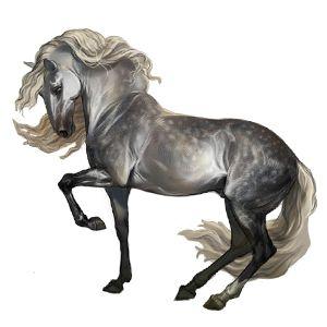 Сальваторе, Pferd Andalusier Hellgrau #6206771 - Howrse