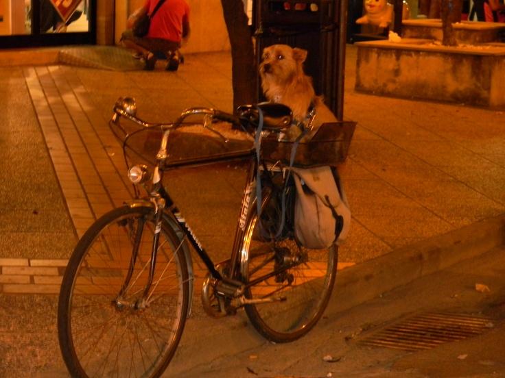 Doggy ride in Tortolì
