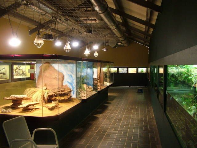 Reptile Room at Darmstadt