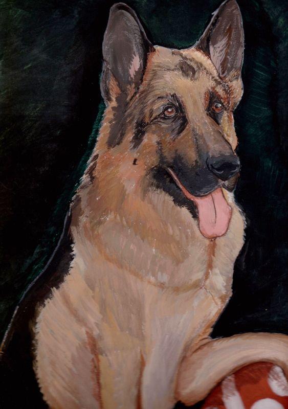 malba nemecký ovčiak