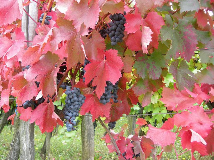 7 unique Bulgarian wine varieties you must taste | kashkaval tourist
