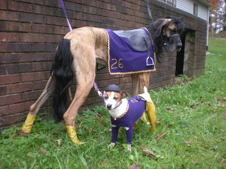Race horse and jockey costume for dogs