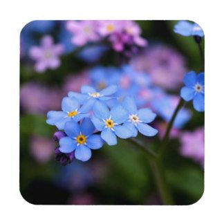Forget-me-not blue coasters