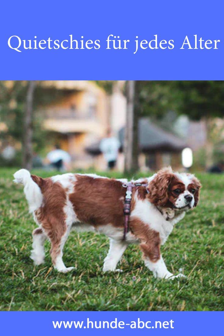Quietschies Fur Jedes Alter In 2020 Hunde Ausgestopftes Tier Hundebekleidung