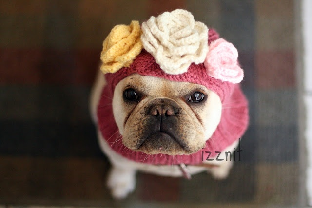 frenchie: Things Adorable, Favorite Things, French Bulldogs, Awwww Dogs, Frenchi, Doggies Flowers, Dogs Balaclava, Cute Dogs, Animal