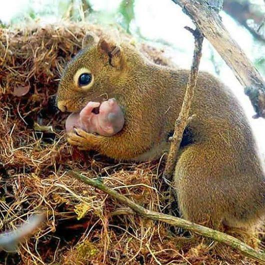 Cuidando de su cachorro / Squirrels - mom and baby