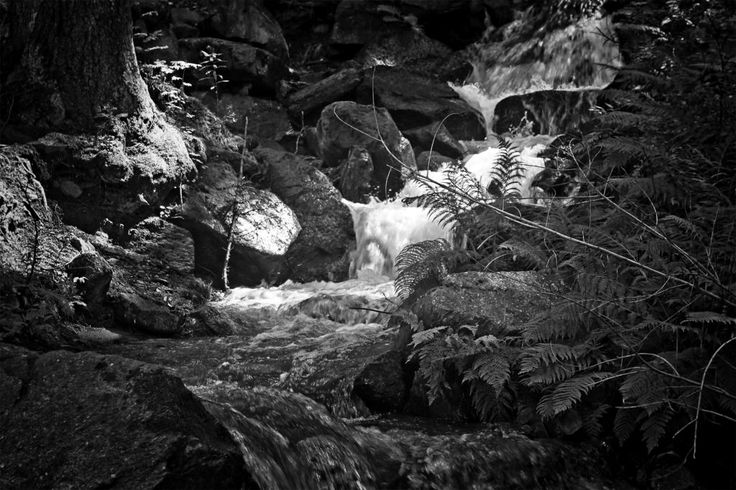 bwstock.photography  //   #forest #stream