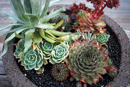 Google Image Result for https://static.shopify.com/s/files/1/0033/6812/files/succulents.jpg%3F1250889156