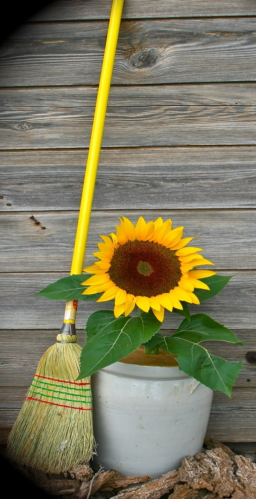 Summer...Time For Sun Flowers