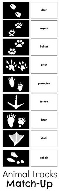 Free printable animal tracks cards. Kids will love trying to match the tracks with the animal that made them, playing memory, or going on an animal tracks hunt!