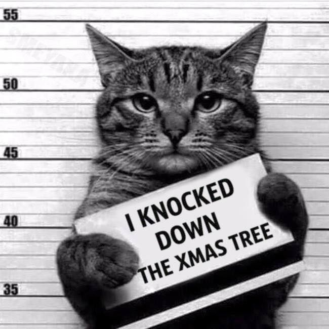 Keep Cat Away From Christmas Tree: 418 Best Christmas Humour Images On Pinterest