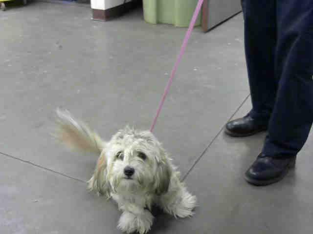 Mesa Az Dog Adoption Petco