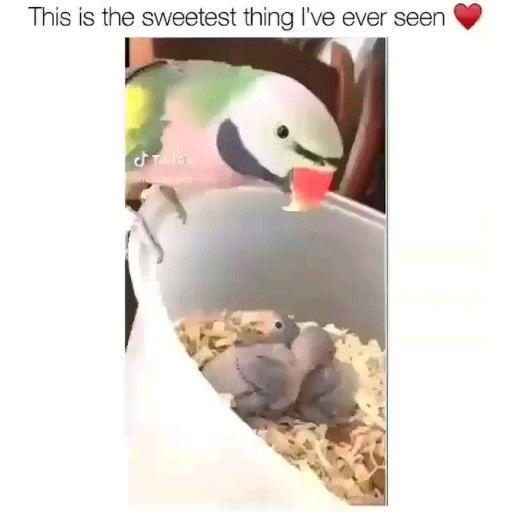 [birds] beautiful parrot is fierce