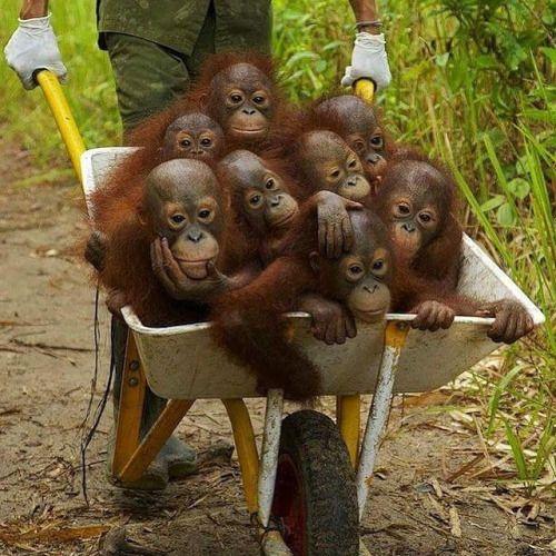 patsavage:  A real barrel of monkeys! Vroom
