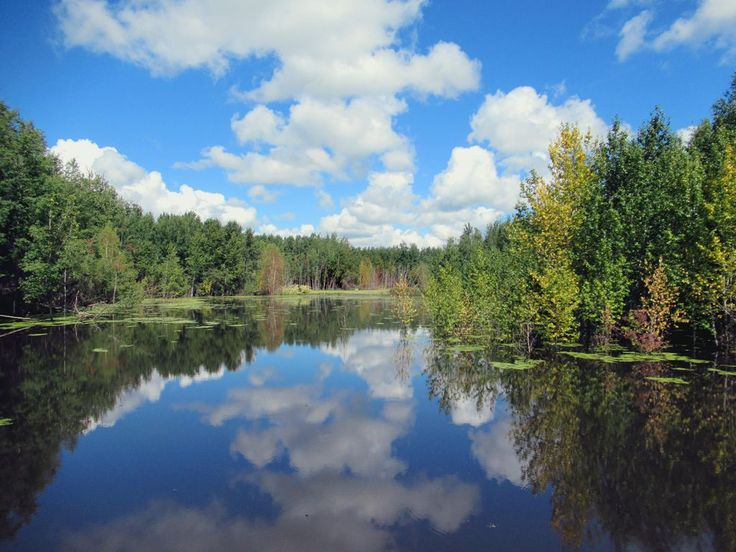 Elk Island National Park, east of Edmonton, Alberta, Canada, contains a number of picturesque small lakes, including this one on the Beaver Pond Trail.