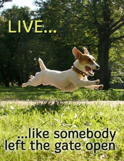 THIS is a GREAT metaphor!!: Thoughts, Jack Russell, Inspiration, Quotes, Funny, Living Life, Happy Dogs, Gates Open, Animal