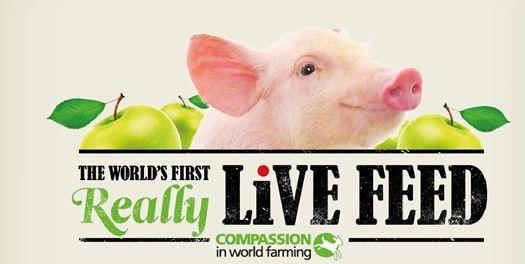 La valla interactiva que alimenta a animales de granja
