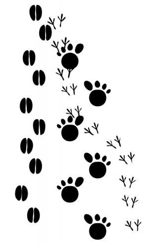 Nature Crafts: Tricky Tracks Raleigh, NC #Kids #Events