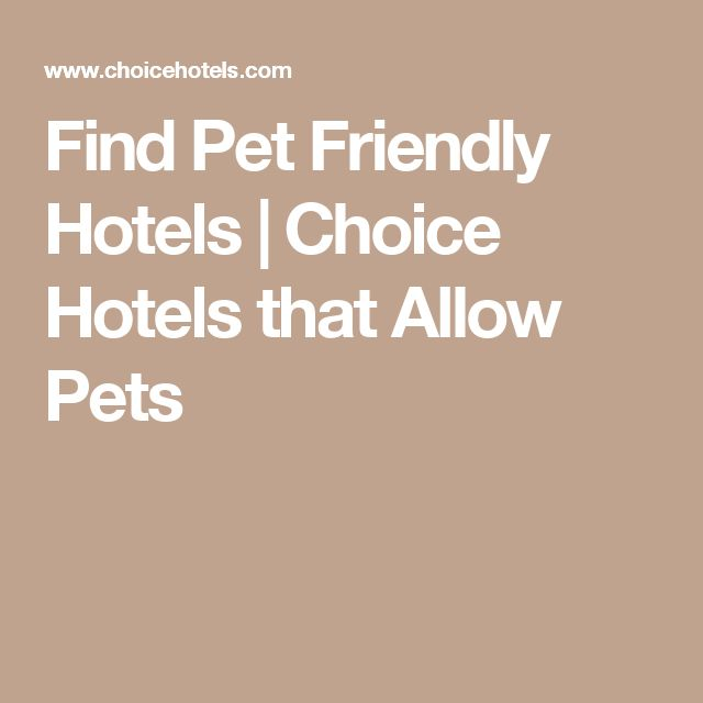 Find Pet Friendly Hotels | Choice Hotels that Allow Pets