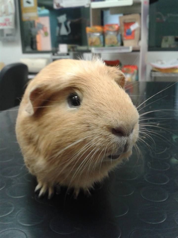 Durante todo el mes de noviembre, campaña de revisión de animales exóticos a precio reducido. http://blog.hvcruzcubierta.com/campana-de-revision-de-exoticos/