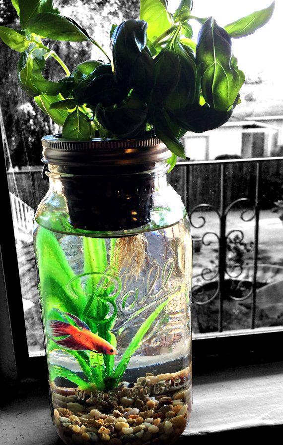 Mason Jar aquaponie Kit bio démarrer votre nouveau par GreenPLUR. Peut être sans le poisson, ça a l'air trop petit pour lui