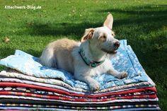 Nähen für den Tierschutz: Hundedecken