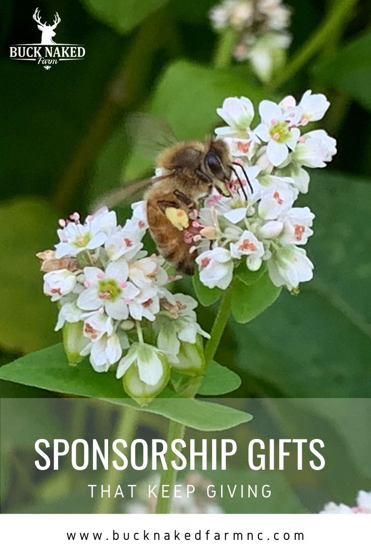 Eco Friendly Sponsorship Gifts That Give All Year And Make A