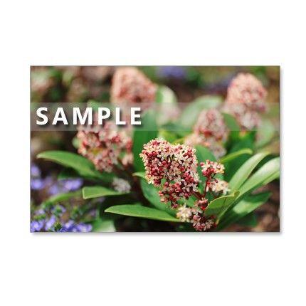 5枚組のポストカードです。早い春に咲く花たち。小花のシキミア、紫色のマメ科の可愛いハーデンベルギア、チューリップ、モクレン、コブシなど春の花を集めました。13...|ハンドメイド、手作り、手仕事品の通販・販売・購入ならCreema。
