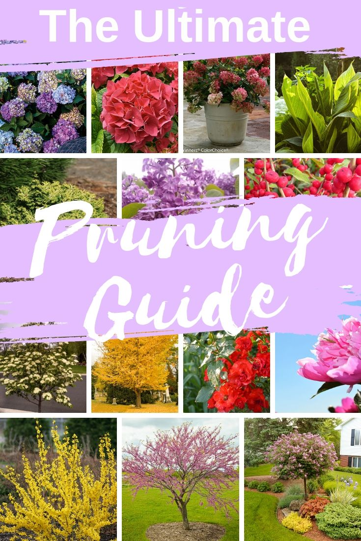 When To Prune Your Trees Shrubs Plants Perennials Pruning Calendar For Gardeners Prune Trees To Plant Perennials