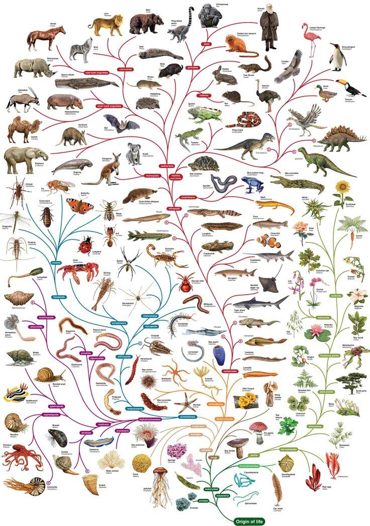 Completísimo mural de la evolución. Genial!!! (en pdf fraccionado en el enlace)