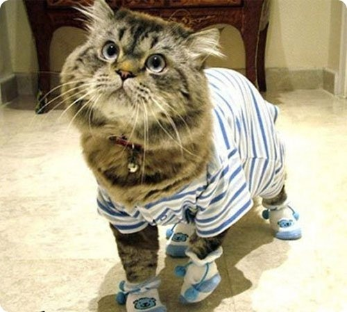 """Résultat de recherche d'images pour """"katze im pyjama comic"""""""