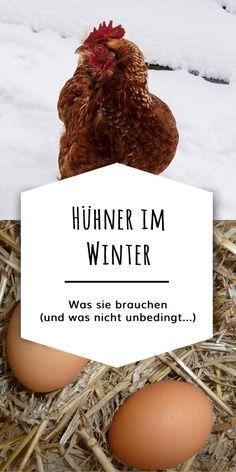 Hühner im Winter halten - | Hühner, Hühner im garten ...