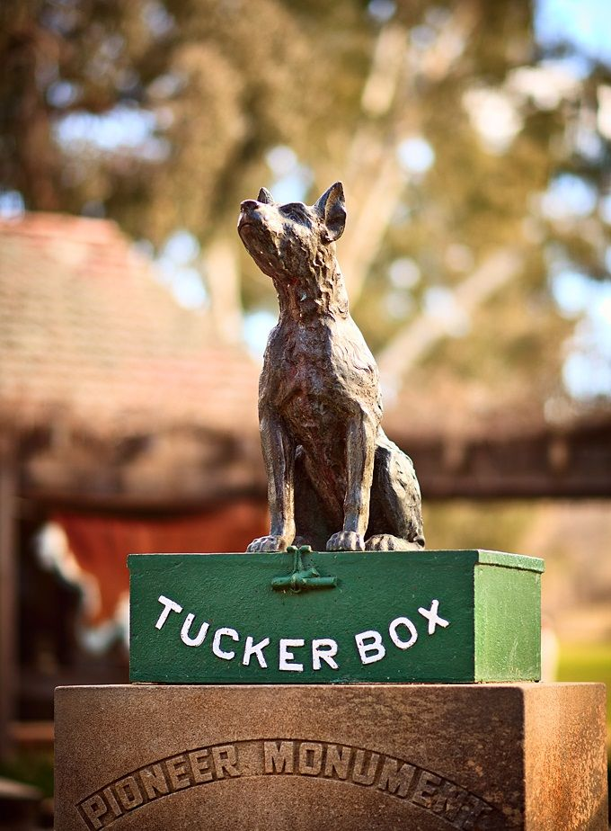 NSW - Gundagai - The Dog on the Tucker Box - The Dog on the Tuckerbox is an Australian historical monument and tourist attraction, located at Snake Gully, five miles from Gundagai, New South Wales. The dog section of the monument was cast in bronze by 'Oliver's Foundry' Sydney and its base sculpted by Gundagai stonemason Frank Rusconi.