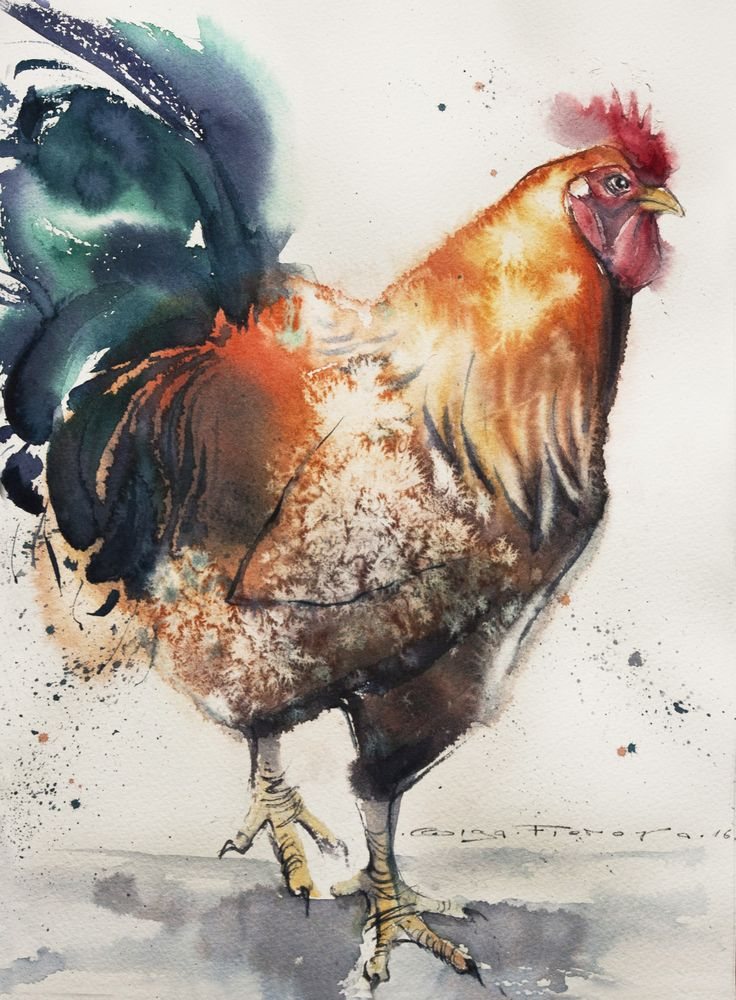 wild red rooster 38 28 sm watercolor on paper  olgaflerova