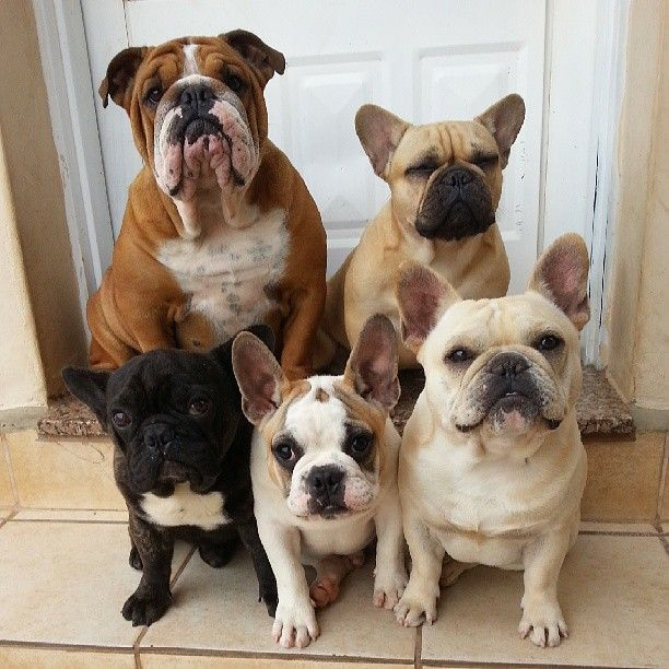 Rescue Deaf Dogs Australia