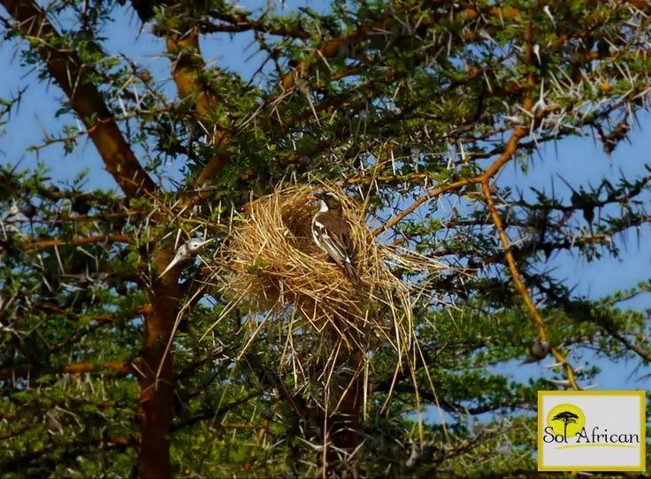 A bright blue sky! #Africa #SouthAfrica #travel #holiday #holidaydestination #tour #tourism #tourismagency #adventure #fun #exotic #safari #wild #wilderness #explore #discover #nature #naturalbeauty #sun #sunshine #bluesky #bird #exoticbird #nest #tree
