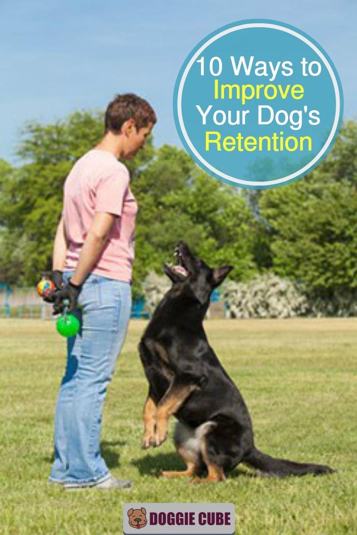 10 Ways To Improve Your Dog S Retention Dog Training Dog