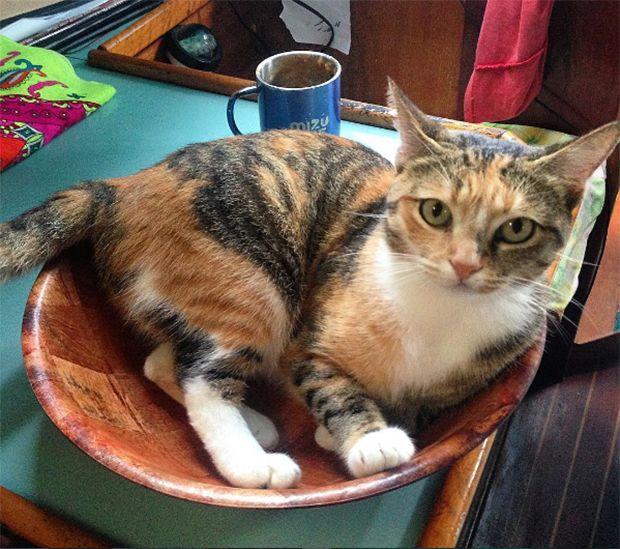 Surfista Liz Clark viaja há anos com sua gata adotada (Tropicat) em um barco;
