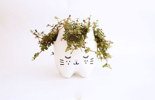 old plastic bottle becomes a little cat