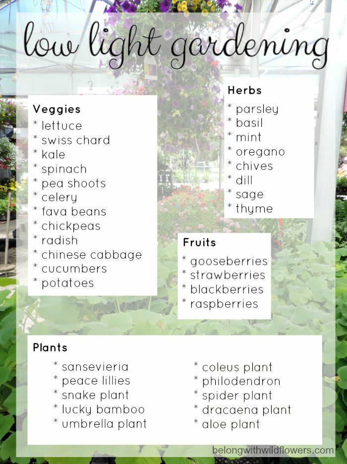 Low Light and Small Space Garden Alternatives