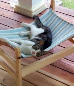 Cómo hacer una hamaca para gatos