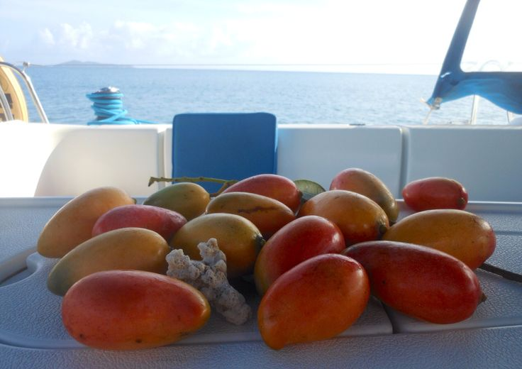 Life on board, Mango catch of the day